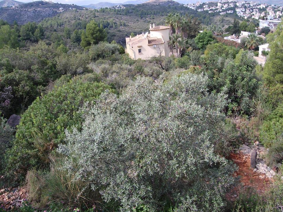 Land in Monte Pego