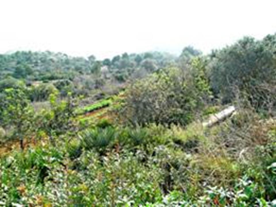 Land in Denia