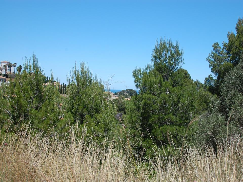 Land in Denia